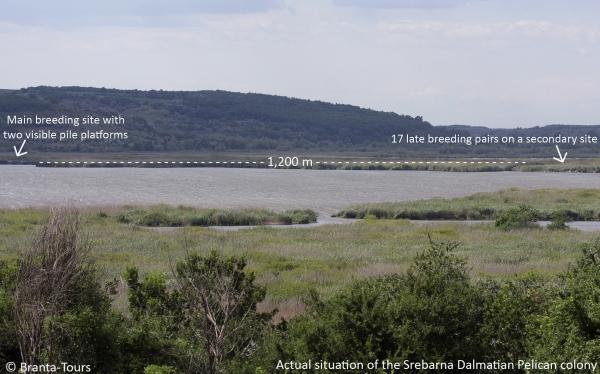Campaña de SWAROVSKI OPTIK para la protección del Pelícano de Dalmacia