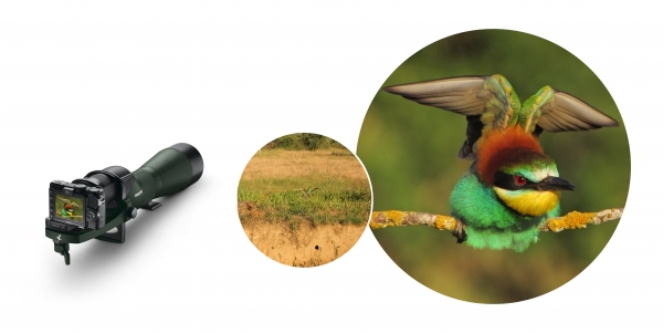 Swarovski Optik presenta las fotos ganadoras del concurso Digiscoper of the Year 2011