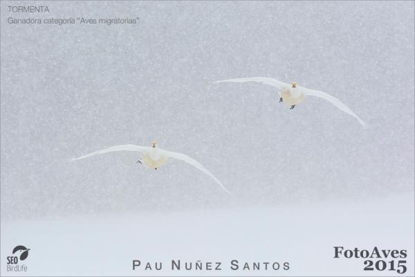 Ya tenemos ganadores del concurso FotoAves 2015 de SEO/BirdLife y SWAROVSKI OPTIK