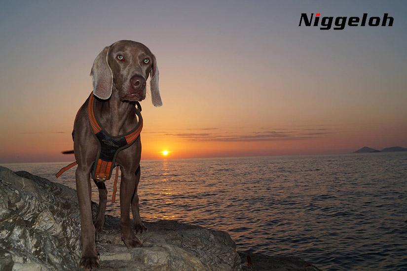 04 Accesorios de caza Niggeloh | Esteller Distribuidor en España y Portugal | Niggeloh